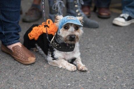killer-pumpkinfest_forweb_-89